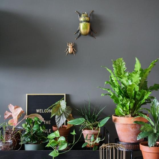 Een deel van de plantencollectie van Karin