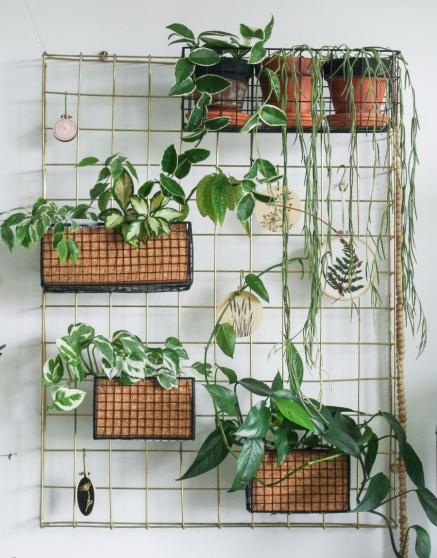 Door  planten in een rek te zetten, oogt het als en groen schilderij aan de muur