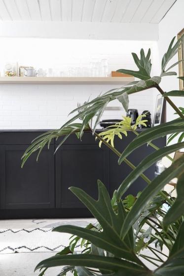 In de keuken word je welkom geheten door deze mooie  Philodendron Xanadu