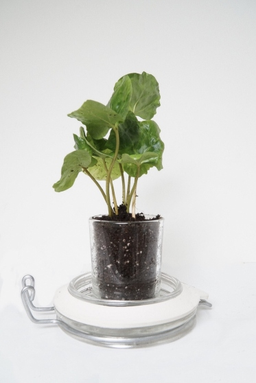 Duw het plantje voorzichtig aan.
