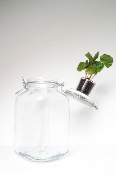 Maak het deksel weer vast aan de pot en laat de pot langzaam over het plantje zakken.