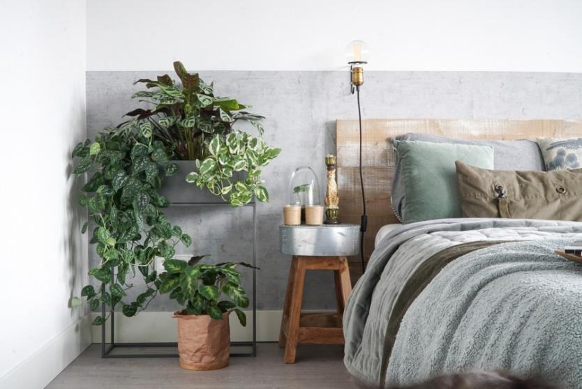 Hoe verder je planten van de verwarming af staan, hoe beter!