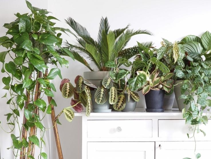 Planten in groepjes neerzetten, zorgt voor meer rust in je interieur