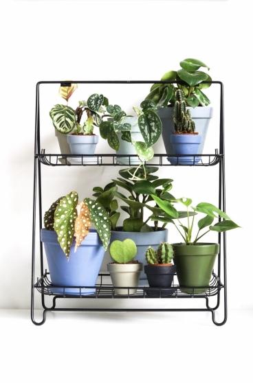 Planten hebben voldoende licht nodig om te kunnen groeien
