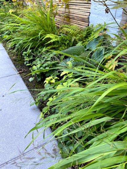 Een mooie mix van schaduwplanten in de border