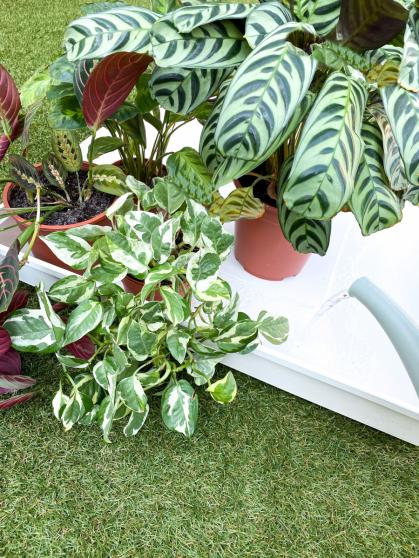 Op deze manier kun je wel 20 planten tegelijk water geven!