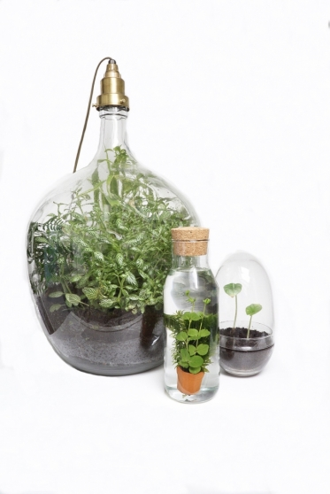 De snelste planten DIY ever!